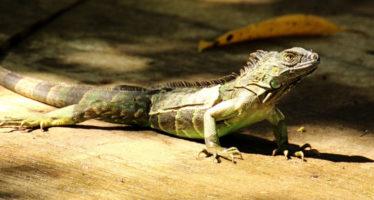 Нейминг крокодила